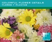 Colorful flower details (CD059)