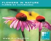 Flowers in Nature (CD074)