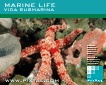 Marine Life (CD211)