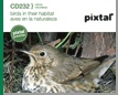 birds in their habitat (CD232)