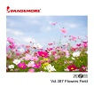 ZOOM387 Flowers Field (IGM-01198870)
