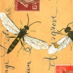 Insect Post (IMZ-IPIBP)