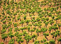 Vineyard. France