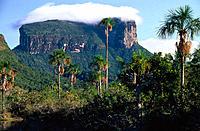 Kurun-Tepui. Canaima National Park. Venezuela