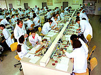 Medical students attending a microbiology course