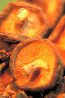 Dried shiitake mushroom