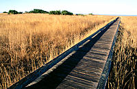 Boardwalk through coastal prairie. Laguna Point trail. Mackerricher State Park. California. USA