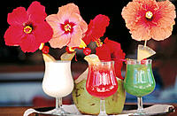 Drinks with hibiscus. Huahine. French Polynesia