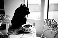 Black cat eating