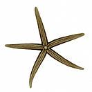 Starfish, X-Ray