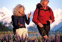 Senior couple hiking in field of lupine. Chugach National Forest. Alaska. USA