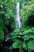 Wailua falls. Maui Island. Hawaii. USA