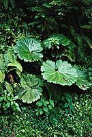 Tropical foliage. Costa Rica