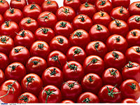 Tomatoes, Vegetable