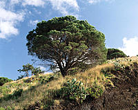 Tree in mountain area. Funchal. Madeira Island. Portugal