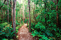 Pathway through rainforest. Tasmania. Australia
