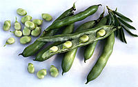 Broad beans, Pods, Beans