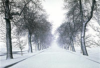 Tree-lined Road in the Winter