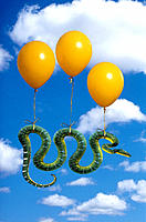 Snake floating in air with balloons
