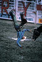 Rodeo cowboy falling headfirst off horse