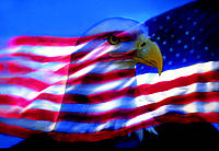 Bald Eagle ,  American Flag