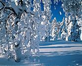 Winter Schnee Baum verschneit