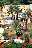 Overview on dwellings and palmes. Sehel island. Aswan. Egypt