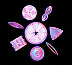 Diatoms. Light micrograph of assorted species of diatom, a group of single-celled algae. Pennate diatoms (at upper right & left and lower right) are s...