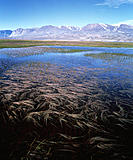 Tundra pond. Tundra is the flat, treeless Arctic region that lies between the polar regions of perpetual snow and ice and the northern limit of tree g...