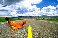 Why did the chicken cross the road?The grass is greener on the other side