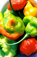 Red and green Peppers. Jamaica