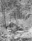 Hut in a forest