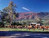 Kiewa Valley Victoria Australia