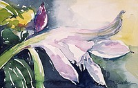 Soft Yard Lily I, by John Bunker, watercolour painting, 1995, 20th Century