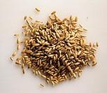 A Pile of Oat Grains