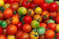 Colorful Tomato Still Life