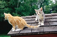 Kittens playing on rooftop