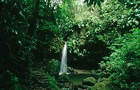 Emerald Pool. Morne Trois Pitons National Park. Commonwealth of Dominica