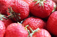 Hybrid strawberry (Fragaria x ananassa)