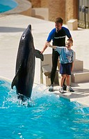 Bottlenose Dolphin (Tursiops truncatus) interacting with humans