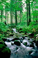 Bayerischer Wald National Park. Germany