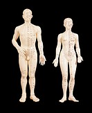 ´Acupuncture models.  Complete models of  the  male and  female  human  body  marked  with acupuncture points (labelled  dots)  and  meridians  (colou...
