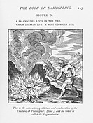 ´Alchemy.  Historical artwork,  from  The  Book  of Lambspring (1749 edition) of an alchemist roasting a salamander. In alchemy, the salamander signif...