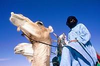 Tuaregs riding their camels. Hoggar Mountains. South Sahara. Algeria