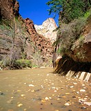 The Virgin River Narrows in Zion National Park. Utah. USA