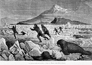The hunters hunted by Walruses, drawing by J. Moynet. Engraving from 'Le tour du monde'