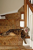 Cat on stairs. USA
