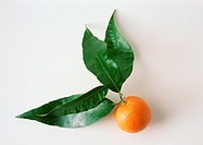 Clementine with leaves