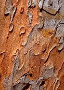 Bark, close-up, full frame