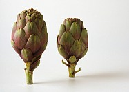 Artichokes against white background